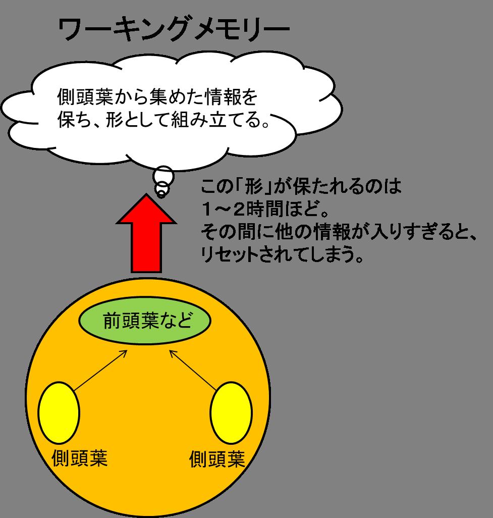 ワーキングメモリーの図