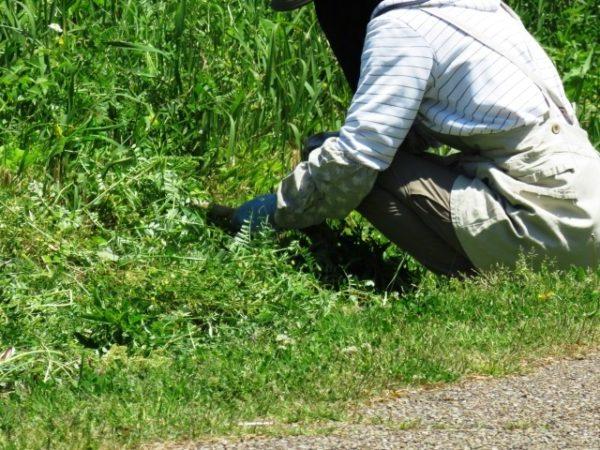 草刈り作業の評価