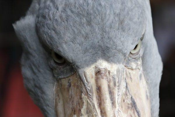不機嫌な鳥