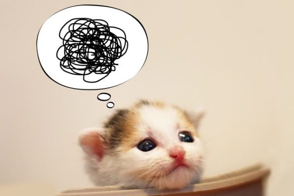 困っている子猫